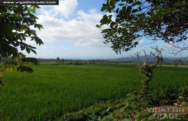 Photo #2 Residential Land for sale in Laguna, Majayjay