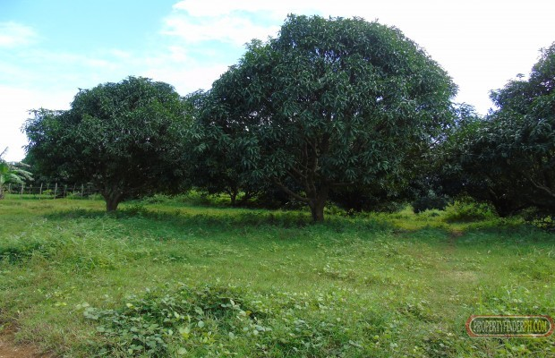Photo #4 Agricultural Land for sale in Bataan, Bagac