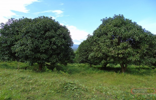 Photo #5 Agricultural Land for sale in Bataan, Bagac