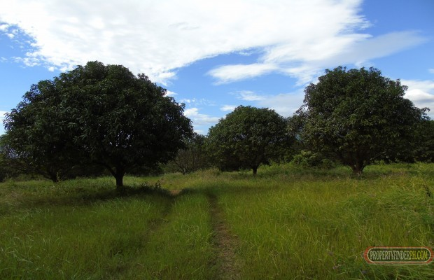 Photo #7 Agricultural Land for sale in Bataan, Bagac