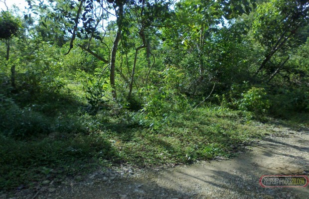 Photo #3 Residential Land for sale in Bohol, Dauis