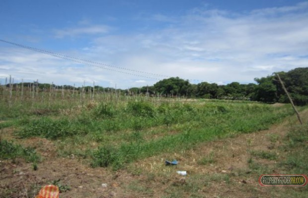 Photo #1 Agricultural Land for sale in Bulacan, Angat