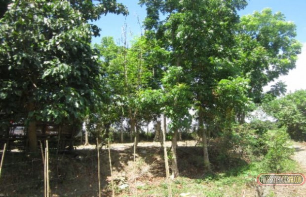 Photo #2 Agricultural Land for sale in Bulacan, Angat