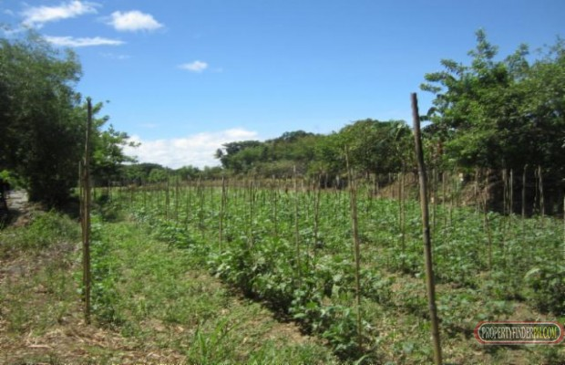 Photo #3 Agricultural Land for sale in Bulacan, Angat