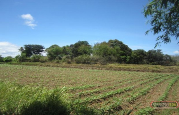 Photo #5 Agricultural Land for sale in Bulacan, Angat