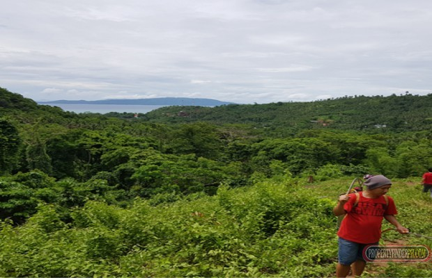 Photo #4 Residential Land for sale in Oriental Mindoro, Puerto Galera
