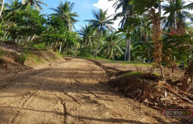 Photo #5 Residential Land for sale in Oriental Mindoro, Puerto Galera
