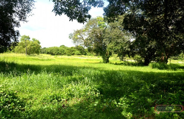 Photo #4 Residential Land for sale in Cavite, Dasmarinas