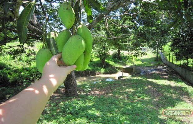 Photo #1 Agricultural Land for sale in Batangas, San Juan