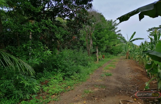 Photo #1 Agricultural Land for sale in Misamis Oriental, Claveria