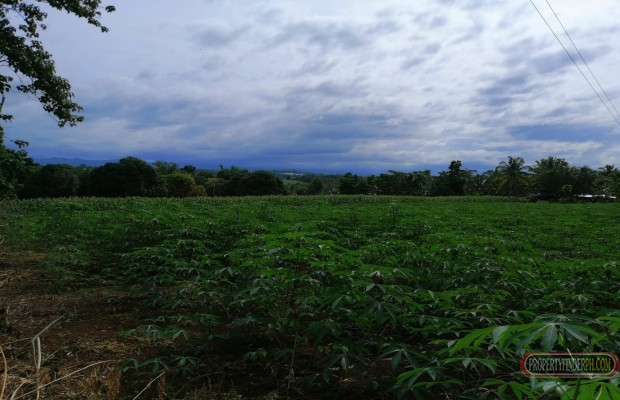Photo #3 Agricultural Land for sale in Misamis Oriental, Claveria