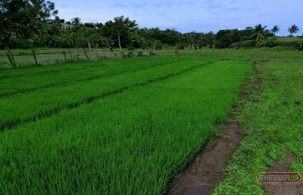 Photo #4 Agricultural Land for sale in Misamis Oriental, Claveria