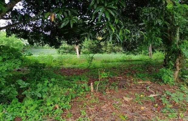 Photo #7 Agricultural Land for sale in Misamis Oriental, Claveria