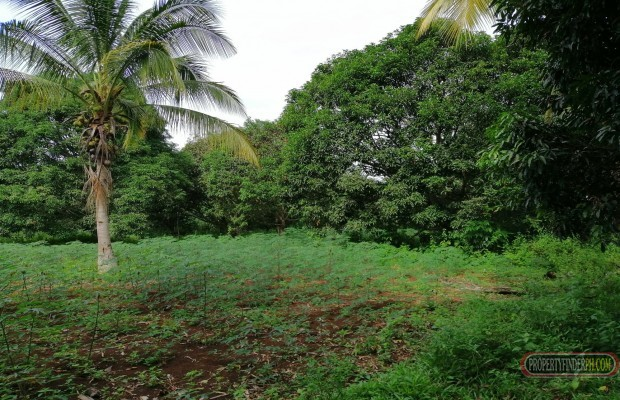 Photo #8 Agricultural Land for sale in Misamis Oriental, Claveria