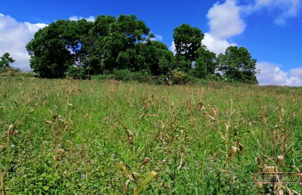 Photo #5 Agricultural Land for sale in Bukidnon, Malaybalay City