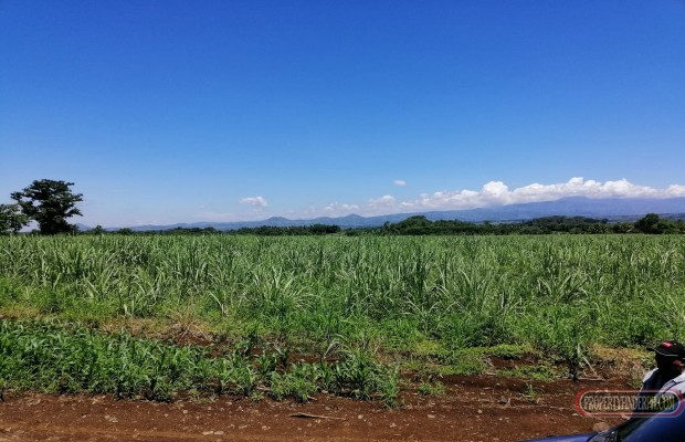 Photo #8 Agricultural Land for sale in Bukidnon, Malaybalay City