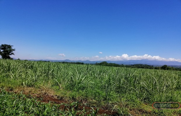 Photo #9 Agricultural Land for sale in Bukidnon, Malaybalay City