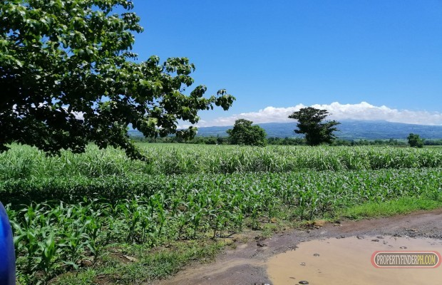 Photo #10 Agricultural Land for sale in Bukidnon, Malaybalay City