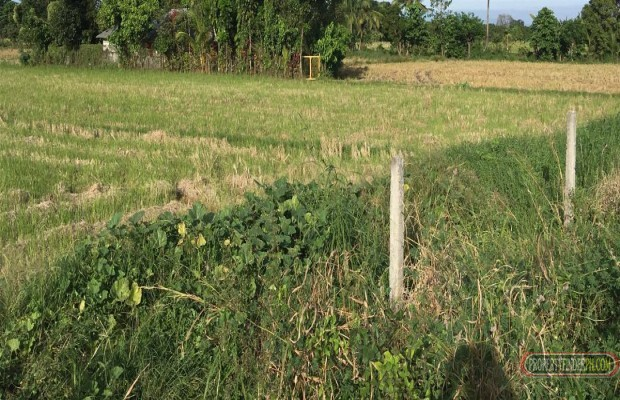Photo #3 Agricultural Land for sale in Bulacan, Baliuag