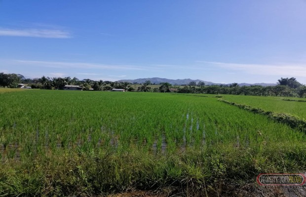Photo #3 Agricultural Land for sale in Bukidnon, Baungon