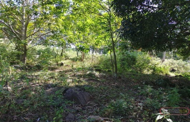 Photo #2 Agricultural Land for sale in Bukidnon, Baungon