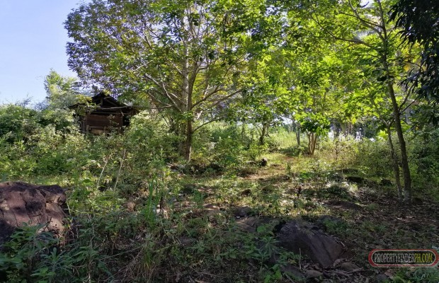 Photo #7 Agricultural Land for sale in Bukidnon, Baungon